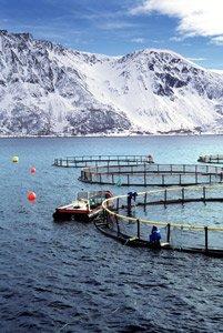 Akquakulturanlage in Norwegen im Winter