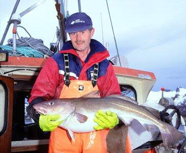 Fischer mit einem riesigen Kabeljau aus Norwegen