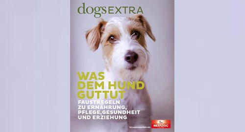 DOGS Medienkooperation