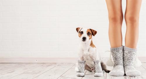 Hund und Frau in Socken. Warmes und gemütliches Zuhause