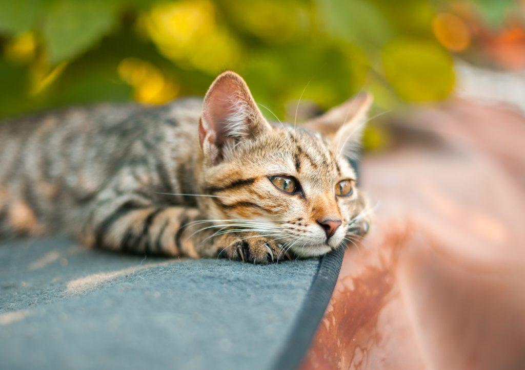 Katze sonnt sich und genießt
